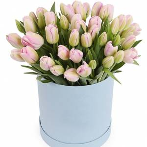 79 нежных тюльпанов в коробке R198